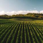رسوبزدا هیدروفلو نقشی مؤثر در مزرعه ارگانیک
