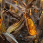 نقش سیستم رسوب زدا هیدروفلو در موفقیت صنایع غذایی